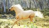 伝説の白い馬