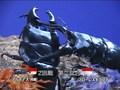 かぶと☆くわがたムシリンピック2005ラストサムライ軌跡への挑戦