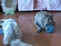 Cat Healing ねこちゃんといっしょ こねこ げんき編