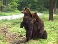 ゆかいなどうぶつたち りくのおともだち~パンダ、クマ、シロクマ~