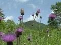 花ごよみ 春