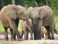 アフリカ・知られざるゾウの秘密(ナチュラル・ワールド)