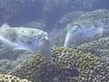 海洋紀行 竜宮城めぐり 海中クライマックス