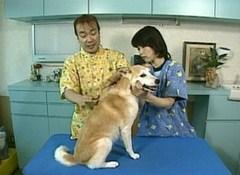 Dr.イシノのわんこマッサージ